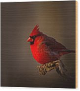 Male Cardinal Subdued Forest Background Wood Print