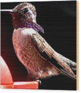 Male Costa Hummingbird On Perch Wood Print