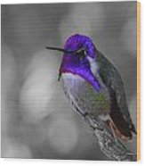 Male Costa's Hummingbird Wood Print by Old Pueblo Photography