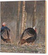 Male Eastern Wild Turkeys Wood Print by Linda Freshwaters Arndt