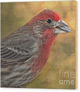 Male Finch With Seed Wood Print