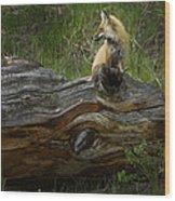 Male Fox   #3575 Wood Print