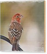 Male House Finch - Digital Paint And Frame Wood Print