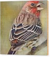 Male House Finch - Digital Paint Wood Print