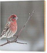 Male House Finch Wood Print