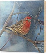 Male House Finch With Blue Texture Wood Print