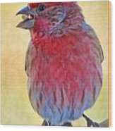 Male Housefinch - Digital Paint Wood Print