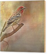 Male Housefinch Looking Up Wood Print