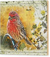Male Housefinch Photoart Wood Print