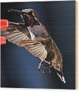 Male Hummingbird Anna's Coming In Too Low Wood Print