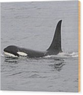 Male Killer Whale Wood Print