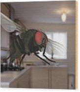 Male Lesser Housefly In Flight, Sem Wood Print