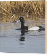 Male Lesser Scaup Wood Print
