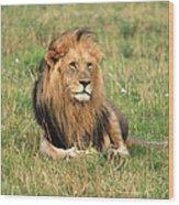 Male Lion On The Masai Mara Wood Print by Aidan Moran