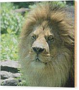 Male Lion Up Close Wood Print