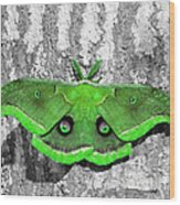 Male Moth Green Wood Print by Al Powell Photography USA