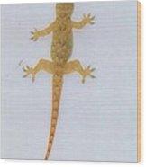 Male Nocturnal Lizard Wood Print