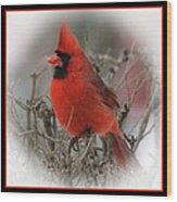 Male Northern Cardinal Wood Print by John Kunze