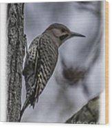 Male - Northern Flicker Wood Print