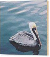 Male Pelican Wood Print