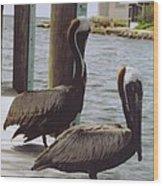 Male Pelicans Wood Print