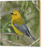 Male Prothonotary Warbler Wood Print