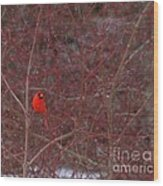 Male Red Cardinal In The Snow Wood Print