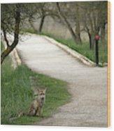 Male Red Fox Vulpes Vulpes Wood Print