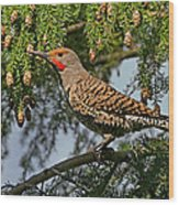 Male Red-shafted Northern Flicker Wood Print