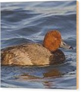 Male Redhead Duck Wood Print