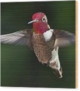 Male Redhead In Flight Wood Print
