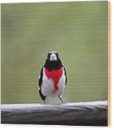 Male Rose-breasted Grosbeak Wood Print
