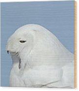 Male Snowy Owl Wood Print