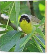 Male Warbler Wood Print