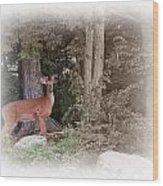 Male Whitetail Deer Wood Print