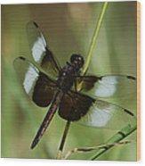 Male Widow Skimmer Dragonfly Wood Print