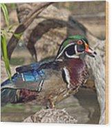 Male Wood Duck Dwf029 Wood Print