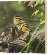 Mallard Babies Wood Print