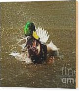 Mallard Bath Time Wood Print