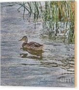 Mallard By The Reeds Wood Print