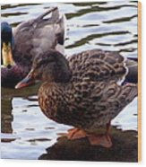 Mallard Drake And Hen Wood Print