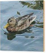 Solitaire Mallard Duck Wood Print