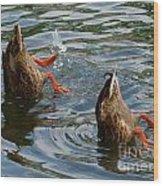 Mallard Duck Butts Wood Print