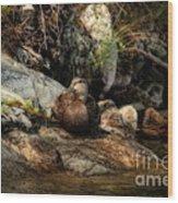 Mallard Duck Onaping 2 Wood Print