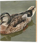 Mallard Duck Series #1 Wood Print