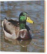 Mallard Duck Watches Wood Print