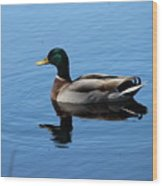 Mallard Duck With Reflection On The Water Wood Print