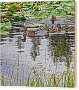 Mallard Ducks In Heron Pond In Grand Teton National Park-wyoming  Wood Print