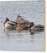 Mallard Ducks Sleeping Wood Print