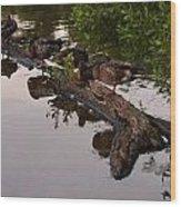 Mallard Ducks Sleeping On A Log Wood Print